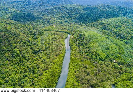 Tropical Green Mangrove Forest With River To The Sea Bay Ecology System