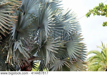 Amazing Rainforest Plants Leafy Background
