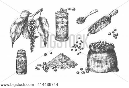 Black Pepper. Hand Drawn With Pungent Taste. Glass Pepperbox. Mill For Condiment. Canvas Bag And Spo