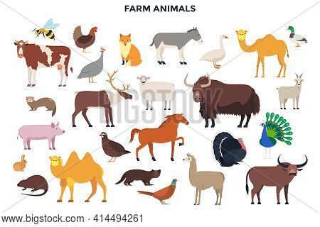 Bundle Of Funny Domestic Farm Animals And Birds, Livestock And Poultry. Husbandry Set. Collection Of