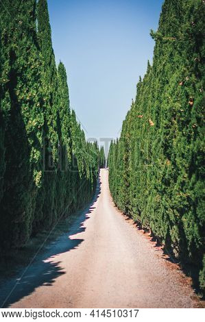 Unpaved Country Road With Cypress Trees. Avenue On Sunny Day In Tuscany, Italy.
