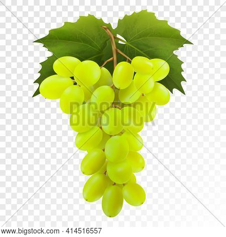 Bunch Of Yellow Or Green Grapes With Vine Leaves Isolated On Transparent Background. Cluster Of Grap