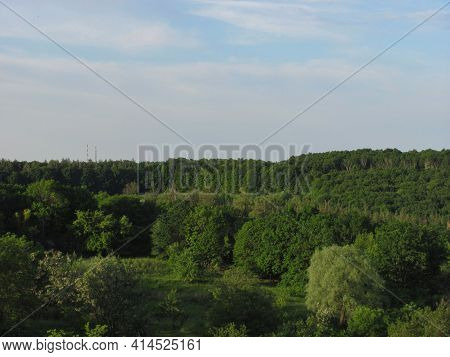 Landscape: Green Trees And Bushes In A Sunny Day