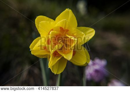 2021_03_13 Narcissus App