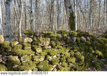 Beautiful Old Mossy Dry Stone Wall In A Forest On The Swedish Island Oland