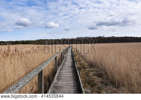 Wooden Footbridge Through The Reeds In The Swedish Nature Reserve Beijershamn On The Island Oland