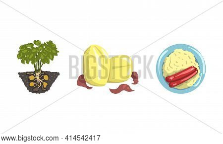 Raw Peeled And Mashed Potato Dish On Plate As Food With Root Vegetable Vector Set