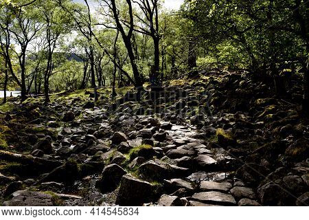 Damp Rocks Under A Woodland Canopy With Moss.