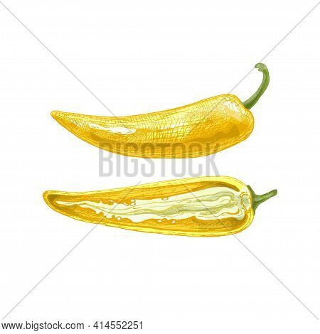 Whole And Half Banana Pepper. Vector Vintage Hatching Color Illustration. Isolated On White Backgrou