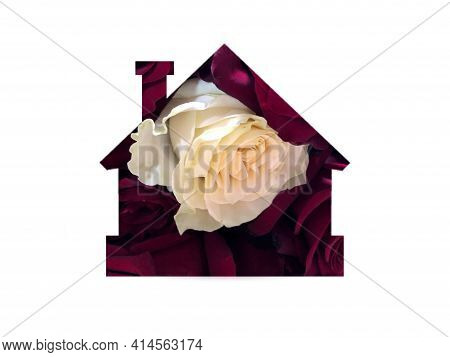 Natural Rose Flowers. One White Rose Among Red Roses. Individuality, Outstanding, Uniqueness, Indepe