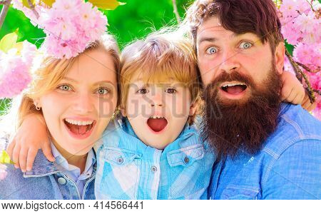 Happy Family In Spring Garden. Mother Father With Small Son Together In Blooming Sakura. Happy Coupl