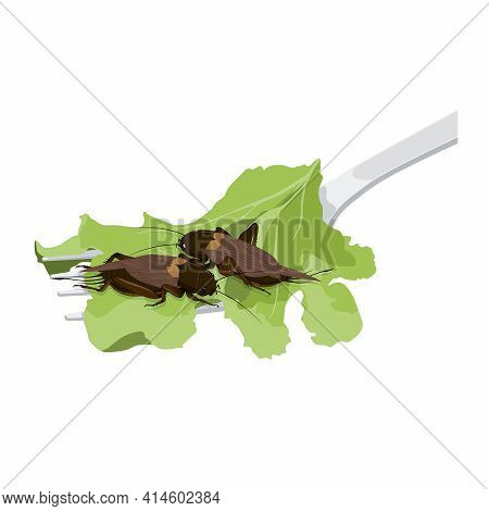 Food Insects: Crickets Insect Deep-fried Crispy For Eating As Food Items On Fork With Salad Vegetabl