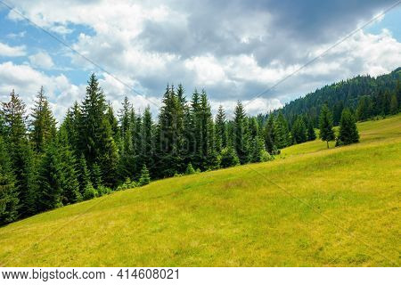 Spruce Trees In Mountains. Summer Countryside Landscape With Grass On The Hills. Nature Scenery On A