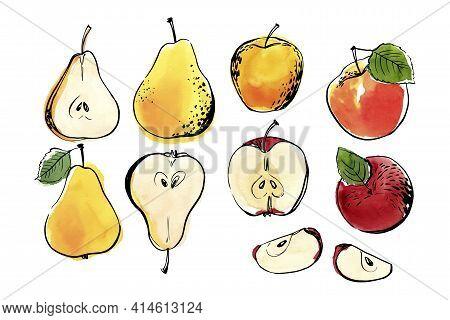 Vector Light Fruit Line Watercolor On White Background. Pear, Apple