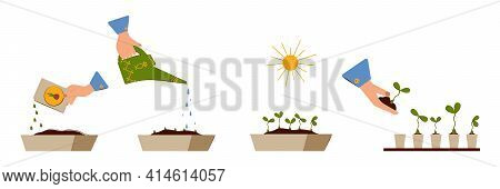 Seedling. Planting Seeds, Watering The Sprouts, Grown Plants, Planting Seedlings In Pots. Planting S
