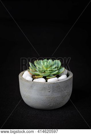 Cactus Plant In A Round Cement Pot, Potted Mini Cactus With White Rocks, Living Room Decor, The Conc