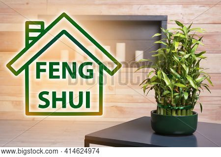 Pot With Green Bamboo On Table In Room. Feng Shui Philosophy