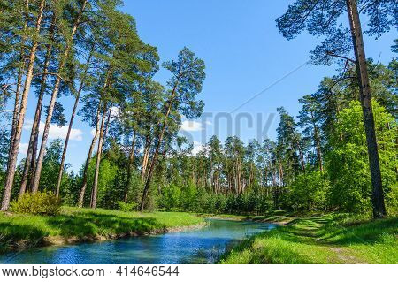 River Flowing Through Pine Forest. Corner Of Nature Almost Untouched By Human