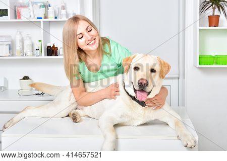 Cheerful Labrador At The Reception At The Veterinarian