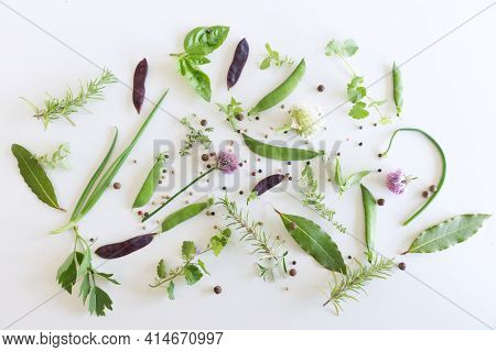 Mix Of Spices And Fresh Garden Herbs, Pea And Bean Pod, Basil, Bay Leaf, Chives, Rosemary, Lovage,gl