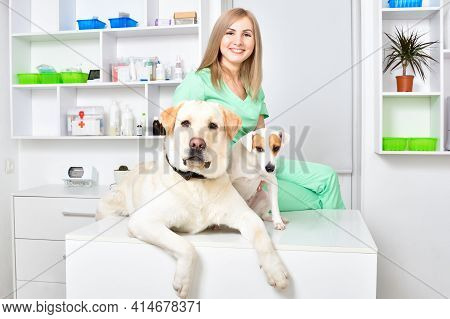 Two Dogs At A Reception At The Vet