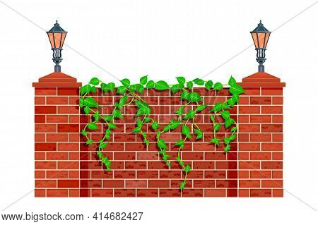 Fence With Climbing Plant Branches Isolated On White Background. Lianas Or Ivy On Red Brick Fence Or