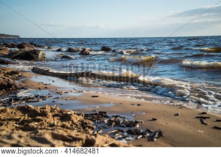 Dry Bark-free Wooden Log On The Sea Shore In The Sand Of The Dune Beach, Which Is Illuminated By The