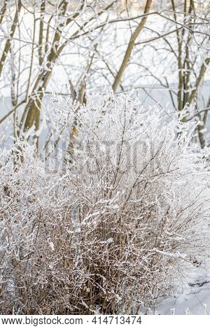 Bushes And Thin Branches In Fluffy White Snow, Trees Behind, Background. Winter North Nature.