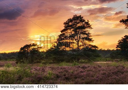 Rain Clouds Obscuring The Setting Sun Over A Field In The Forest With Purple Heather
