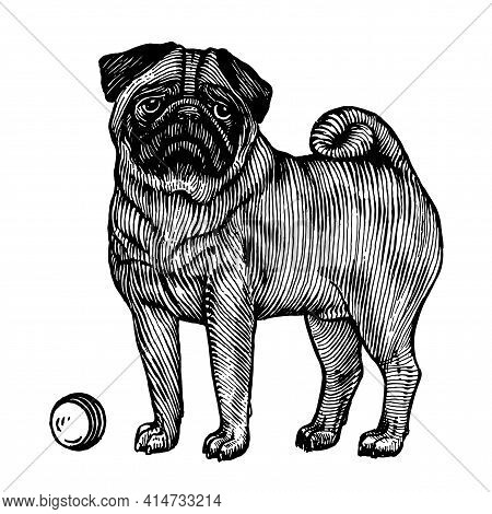Pug, A Dog With A Ball, Vector Illustration. Vintage Graphics And Handwork. The Dog Stands Near The