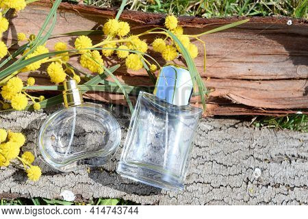 Bottles Of Womens And Mens Perfume Against The Background Tree Bark With A Branch Mimosa In The Sunl