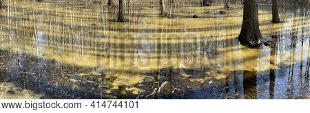 In The Wood The Spring Begins, Trees And Bushes Stand In Water, A Sunny Day, Patches Of Light And Re