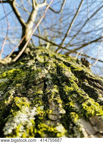Close-up On The Bark Of A Tree. Trunk In Low Angle View. Selective Focus, Deliberately Blurred Backg