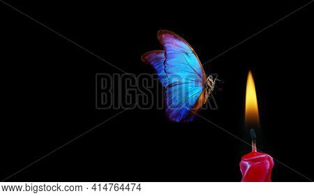 Butterfly Flying Into The Light Of A Candle. Bright Tropical Morpho Butterfly And Candle Flame On Bl