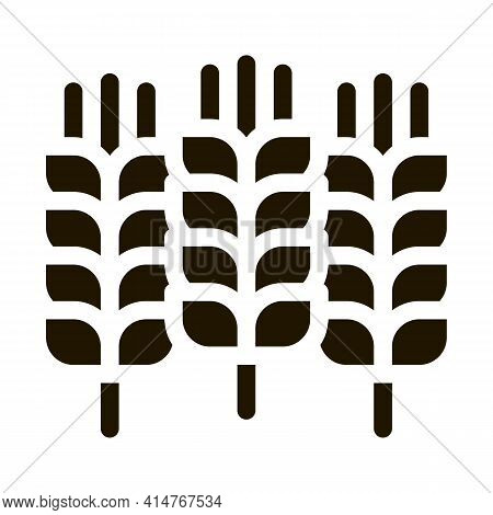 Natural Wheat Ears Harvest Icon Vector. Agricultural Farmland Wheat Plant Harvest Pictogram. Agricul