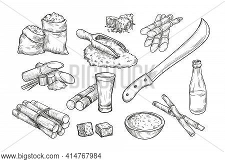 Sugarcane Farm Elements Isolated Hand Drawn Vector Illustration Collection. Engraved Sugar Cane, Rum