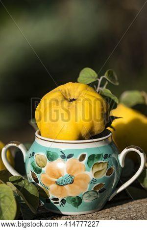 Autumn Still Life Photo Of Ripe Quince In Grandmas Vase Near The Honey