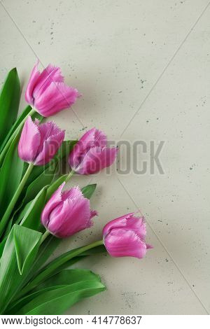 Top View. Five Pink Tulips On A Light Background