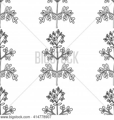 Common Rue, Seamless B-w Ww Dd Herb Isilated