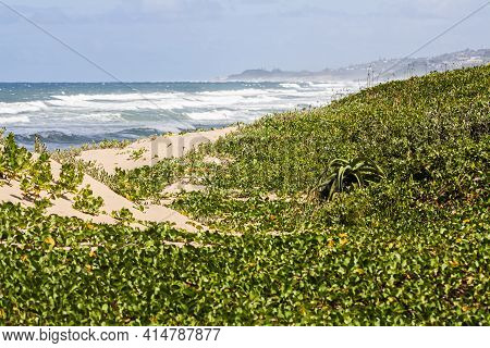 Dune Covered In Plants With Rough Sea