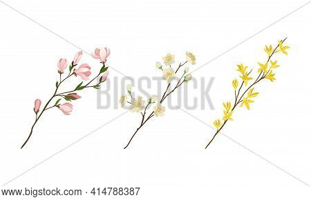 Floral Twigs And Branches With Tender Flower Buds And New Leaves Vector Set