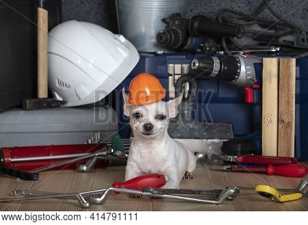 Labor Day And A Smiling Chihuahua Dog Lies In A Red Helmet Among The Wrenches And Tools Scattered Ar