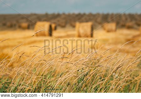 Grass And Summer Hay Rolls In Straw Field Landscape. Haystack, Hay Roll