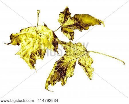 Three Golden Tree Leaves Isolated On A White Background. Gilded Leaves Set.
