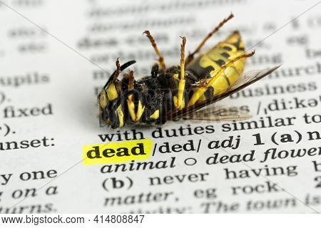 Closeup Of Dead Wasp On Dictionary Beside The Word Dead