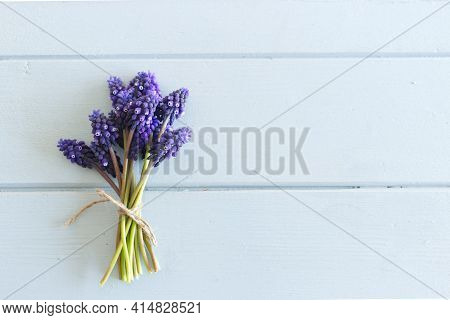 Spring Is Coming. Muscari Flowers On A Blue Wooden Table. Close Up Image. Concept Spring Flowers. Sp