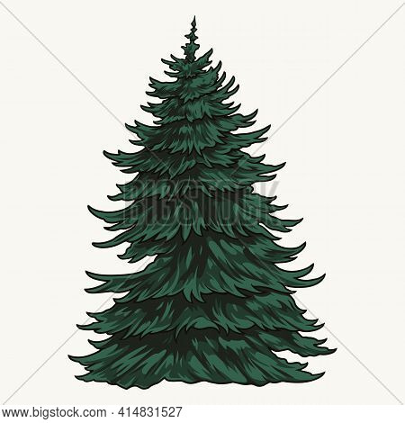 Evergreen Fir Tree Vintage Colorful Template On White Background Isolated Vector Illustration
