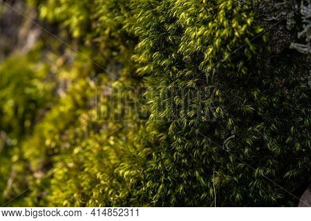 Luscious Green Bright Moss Wall, Spring Day
