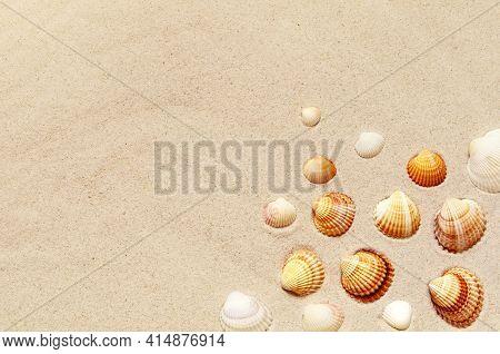 Seashells Pattern On The Sandy Beach. Summer Background.