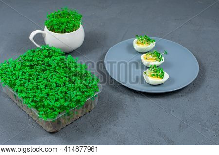 Microgreens On Eggs. Decorate The Salad With Microgreen Leaves. Diet Food. Boiled And Fresh Eggs On